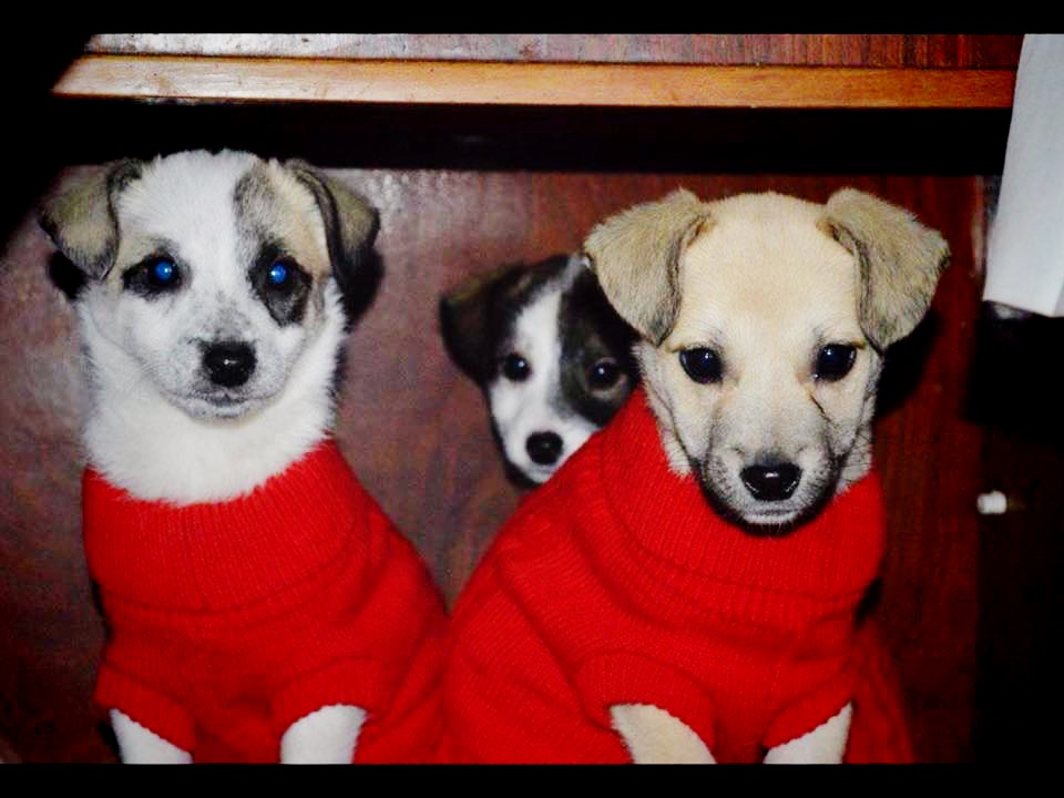 maoland dogs2